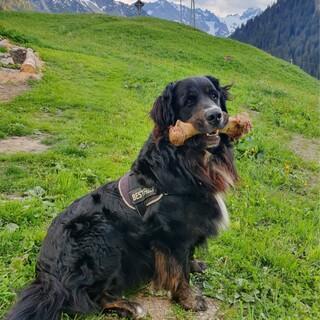 Hüttenhund und Weitwanderer Willi; Foto: Team Edelweisshütte
