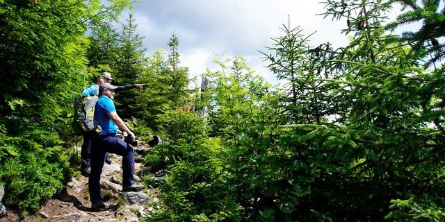 Im Aufstieg zum Siebensteinkopf zeigt sich die Dynamik der Waldverjüngung besonders eindrucksvoll. Foto: Joachim Chwaszcza