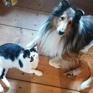 Gipsy und Wiggerl, Foto: Ilona Hultsch