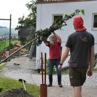 Auch schon größere Bäume werden eingepflanzt, Foto: Jubi/Nico Löder