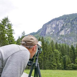 Steinadler beobachten in den Ammergauer Alpen - Foto: Nadine Ormo