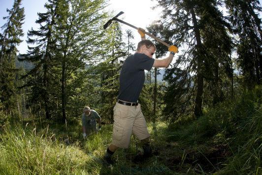 MKO Schutzwald 2009 052
