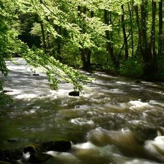 Schwarzwald Panorama-Radweg - frisches Wasser, frisches Grün – da atmet die Seele tief durch. Foto: Thorsten Brönner