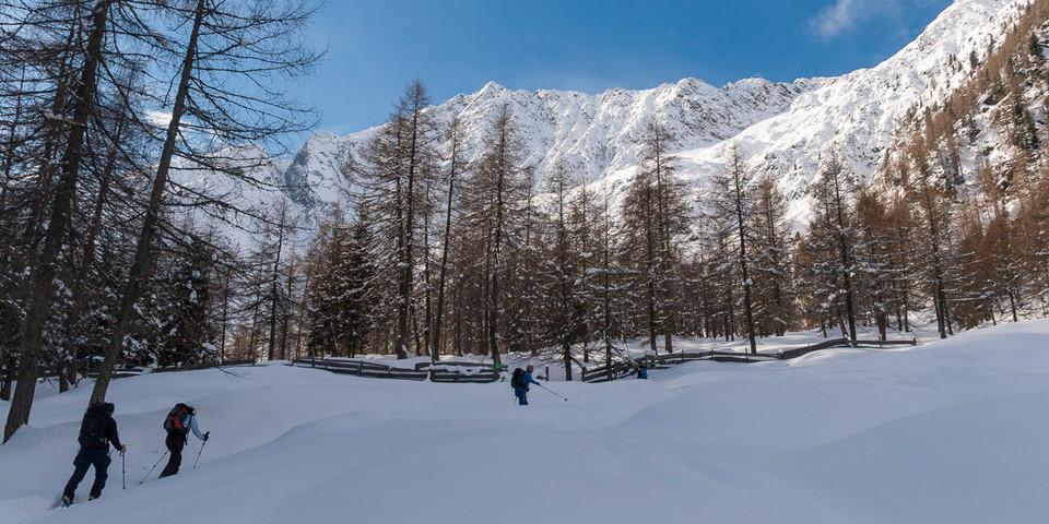 Über dem Lärchenwald öffnen sich die weiten Hänge zur Alpenspitze. Foto: Ingo Röger