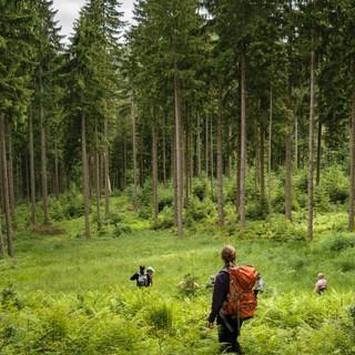 """Aktion Schutzwald - Frei nach Caspar David Friedrich """"Wanderin über dem Schutzwald"""", Foto: DAV/Arvid Uhlig"""