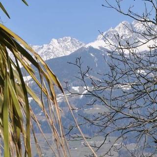 In Meran - Unter Palmen: In Meran sind Skitourengeher fast seltener als Außerirdische. Foto: Stefan Herbke