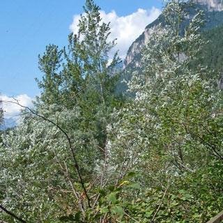 Am Lago Santa Croce - Vor dem Lago Santa Croce führt die Radroute spannend einer Felswand entlang.