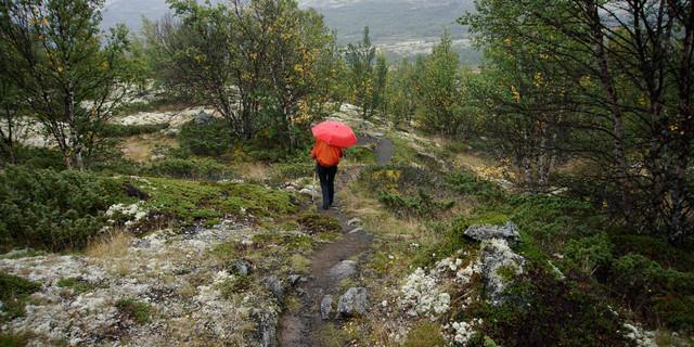 Nicht immer ist das Wetter sonnig – mitunter begleitet Regen den Olavsweg. Foto: Joachim Chwaszcza