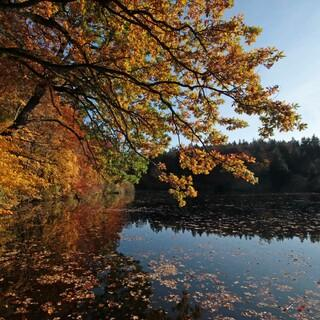 Die Sonne wird in den kommenden Tagen das Herbstlaub zum Leuchten bringen. Foto: DAV/ Pröttel