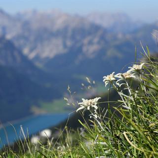 edelweiss-strom-anzeigenmotiv
