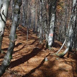 Gut auf die Markierung achten: Raschelndes Herbstlaub im Wald unter dem Tremelsattel. Foto: Axel Klemmer