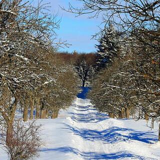 Häufig sind Winterwanderwege geräumt. Foto: pixabay/Jürgen Sieber