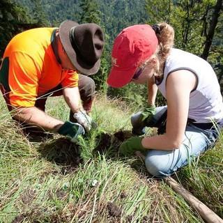Aktion-Schutzwald-Projekte-Naturschutz