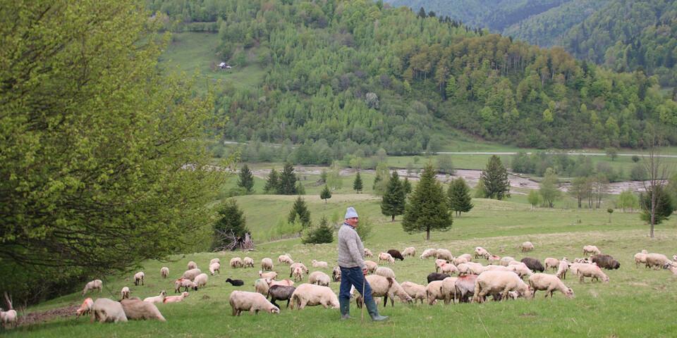 Die Schäfer müssen ihre Herden vor Wölfen und Bären beschützen. Foto: Win Schumacher, weltwege.de