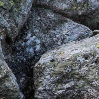 <p>Füttern unerwünscht: Murmeltiere haben weder Interesse noch Verständnis für Steilwand-Abenteuer.</p>  <p>Foto: Ralf Gantzhorn</p>