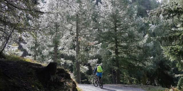 Glaciara: Beim langen Aufstieg von Grengiols zum Breithornsattel glänzt Morgentau im Gegenlicht der Lärchen im Saliwald. Foto: Traian Grigorian