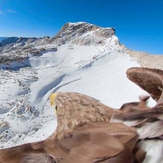 Foto: Eagle Wings Foundation
