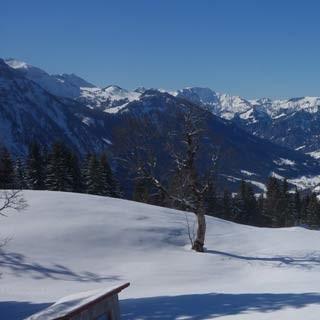 Aufstieg zum Hirschberg - Sanfte Hänge, weite Aussicht prägen auch den Aufstieg von Bizau zum Hirschberg.