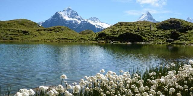 Von Wollgras umstandene Seen mit Ausblick auf Wetter- und Schreckhorn würzen die Wanderung an der Schynigen Platte. Foto: Bernd Jung