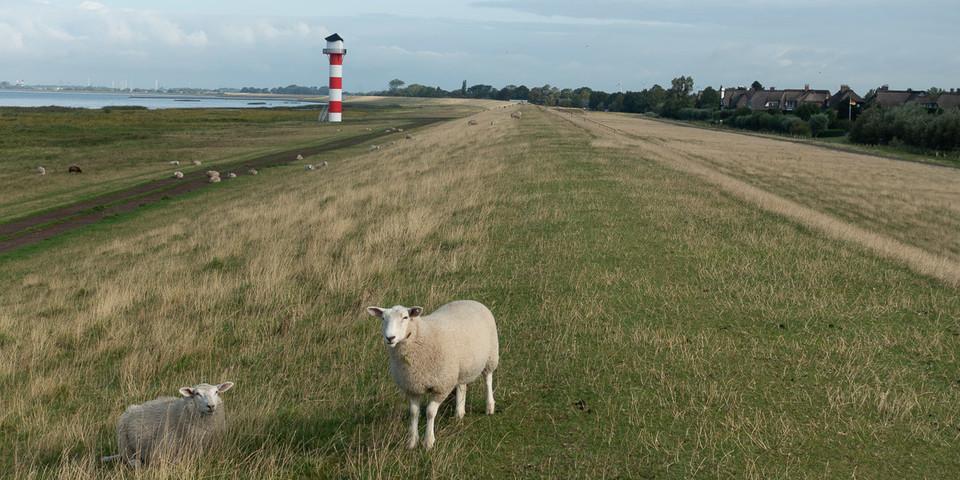 Auf dem Elbdeich: Wind, Schafe und weite Sichten. Foto: Christof Herrmann