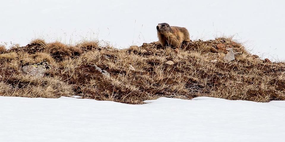 Hoppla, Winterschlaf schon vorbei! Die Saison hier geht halt bis weit ins Frühjahr. Heißt ja auch Tiergartenspitze. Foto: Markus Stadler
