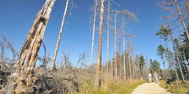 Am Quitschenberg hat der Borkenkäfer die Bäume zerfressen. Foto: Folkert Lenz