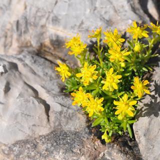 Blumen wachsen selbst aus schmalen Felsspalten. Foto: Lena Behrendes