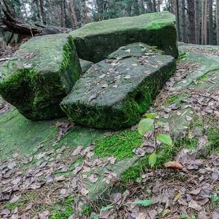 Bemooste Blöcke im Wald laden die Fantasie zum Streifzug. Foto: DAV/Ingo Röger
