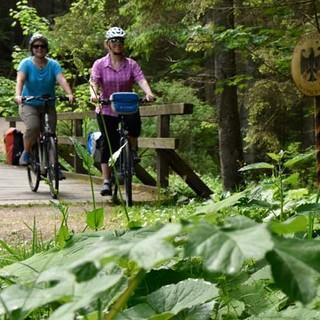 Mit dem Rad durch den Bayerischen Wald - Im Nationalpark kann man die Kreisläufe der Natur miterleben und nachvollziehen. Foto: Thorsten Brönner