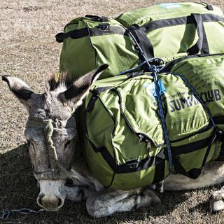 Der Esel als Sinnbild des Expeditionsendes, Foto: Dörte Pietron
