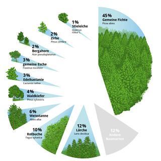 Vorkommen der verschiedenen Baumarten - Grafik: Marmota Maps