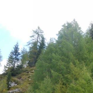 Casera Montemaggiore - <p>Der Abstecher zur Casera Montemaggiore lässt sich gut in den Abstieg nach Forni di Sopra einbauen; diese Alm wurde komplett aufgegeben und verfällt.</p>