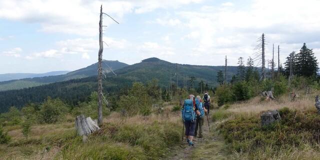 Der Große Rachel und der Lusen sind bekannt für ihre kahlen Bäume. Die Waldsteppen sind seit Jahrzehnten auf den Borkenkäfer und andere Schädlinge zurückzuführen. Und dennoch erholen sich die Wälder langsam, aber stetig.