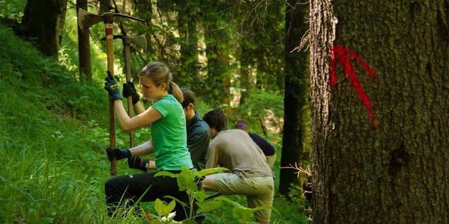 Aktion Schutzwald - Ehrenamtliche Arbeitseinsätze im alpinen Schutzwald, Foto: DAV/Arvid Uhlig