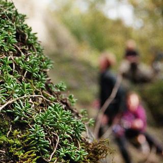 Bilder Naturvertäglich Klettern