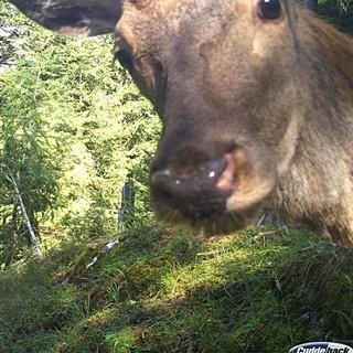 Sicherlich kein Selfie. Foto: Privat