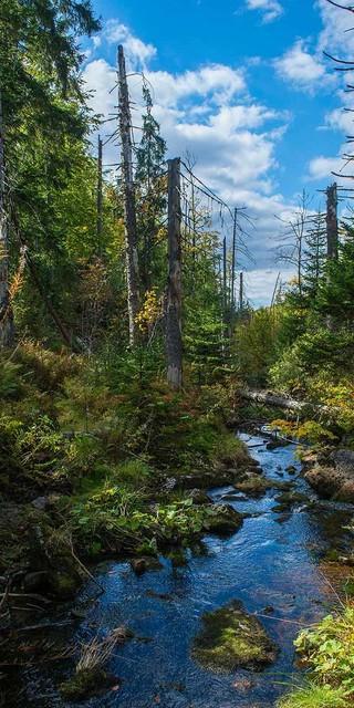 Bach im Nationalpark Bayerischer Wald, Foto: Daniel Rosengren
