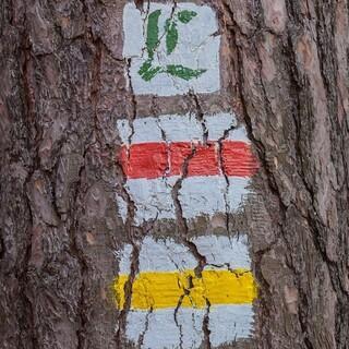 Die Wanderwege sind meist gut markiert. Foto: DAV/Ingo Röger