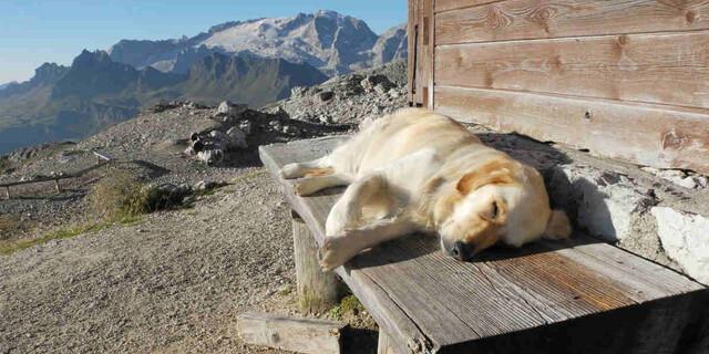 Bevor man mit Hund eine Alpenvereinshütte ansteuert, vorher bei den Httenwirtsleuten anrufen. Foto: AdobeStock