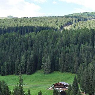 Wettrüsten der Skigebiete - Zusammenschluss der Skigebiete Helm und Rotwand, Sextener Dolomiten, Südtirol: Rodung einer neuen Skipiste. (Foto: H.P. Stauder)