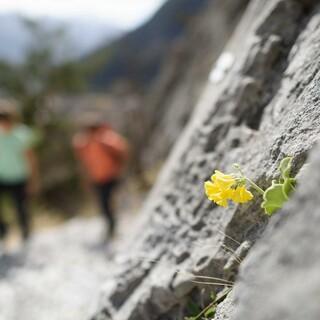 Die Natur bewusst wahrnehmen und verstehen. Foto: DAV/Wolfgang Ehn
