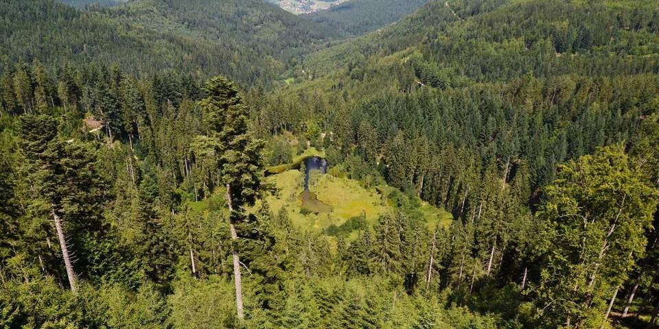 Der kleine Ellbachsee liegt eingebettet in dichtes Waldgrün. Foto: Joachim Chwaszcza