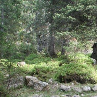 """Valsugana-2©Traian Grigorian - <p class=""""MsoNormal"""">   Die Tour im Val Campelle führt unterhalb der Cima d'Asta in ursprüngliche Wälder. </p> <p class=""""MsoNormal"""">   Foto: Traian Grigorian </p>"""