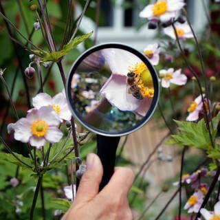 Mit einer Lupe lassen sich viele Insekten genau bestimmen. Foto: NABU/M. Sieber