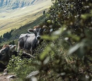 Kräfte tanken in der Natur. Bildrechte: DAV/Marcel Dambon