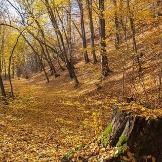 Lichte Mischwälder lassen vor allem im Herbst das Herz freier schlagen. Foto: DAV/Ingo Röger