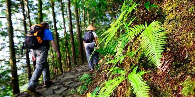 Ruhig geht es auf dem Kumano Kodo zu – dem wichtigsten japanischen Pilgerwegenetz. Foto: Norbert Eisele-Hein
