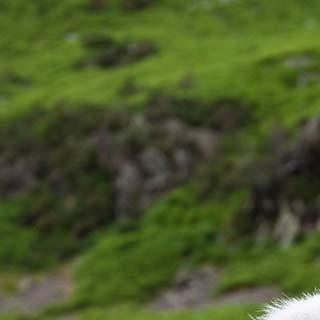Kompetente Beobachtung - Was gibt es im Lake District reichlich? Touristen und Schafe!