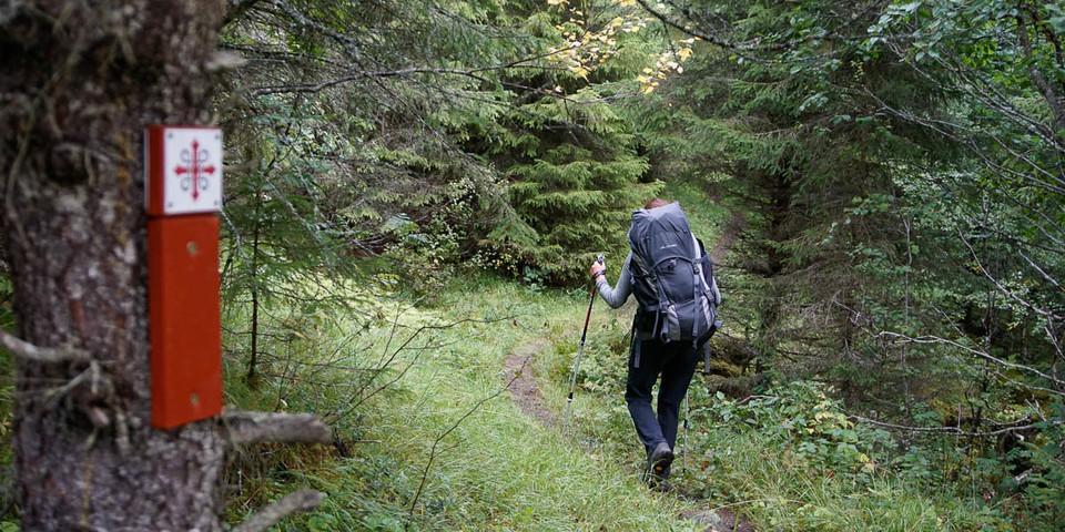 Auch in den dichten Wäldern ist der Olavsweg perfekt markiert. Foto: Joachim Chwaszcza