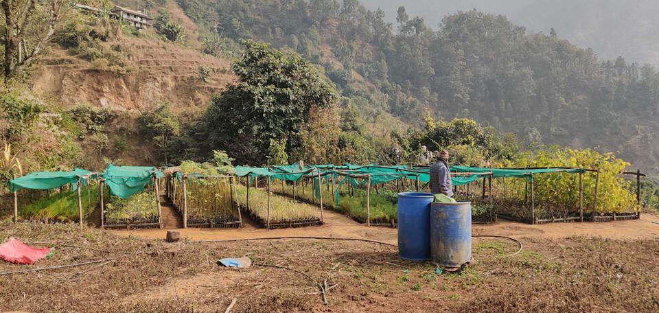 Ab August werden die Bäumchen nahe Kathmandu im Distrikt Lalitpur verpflanzt. Foto: DAV Summit Club